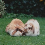 2 rabbits in garden