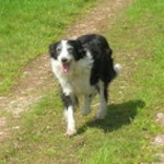 Arthritic dog on meds