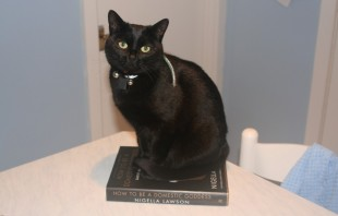 Cat on cookbook