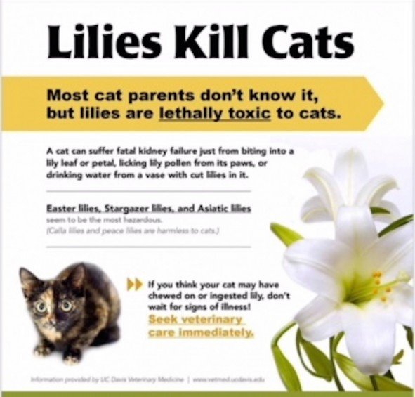 Cat risk of poison
