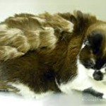 Elderly cat need grooming