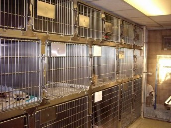 Cages in ward