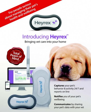 Advert for Heyrex