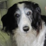 Elderly dog